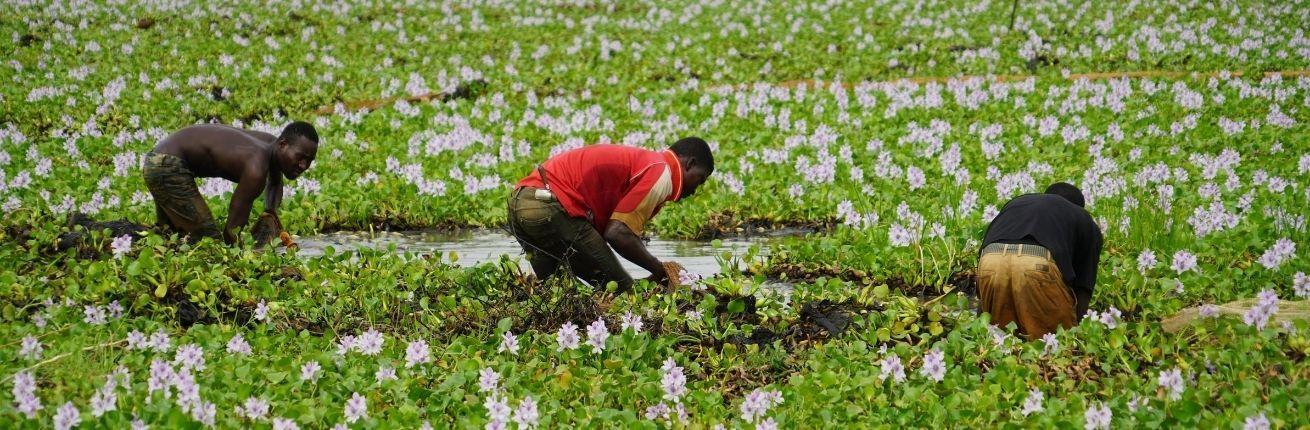 Dagloners werken op het land in Nigeria