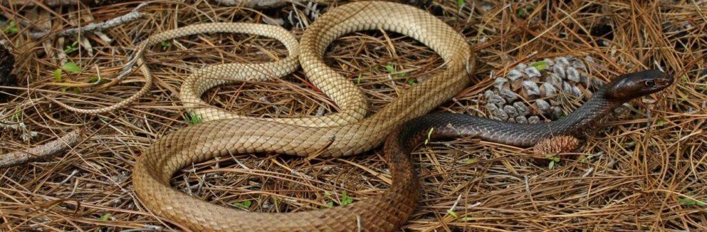 Wat te doen bij een slangenbeet