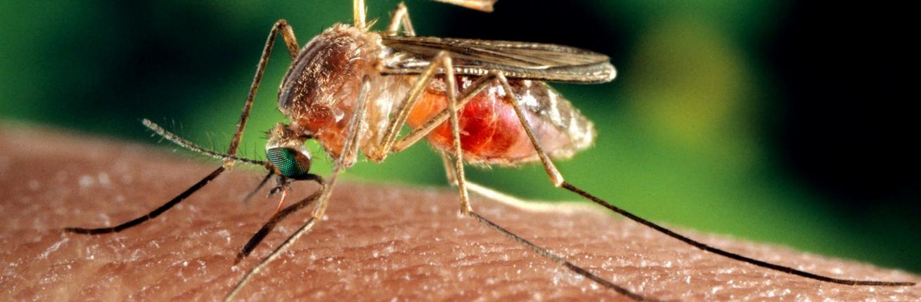 Wat te doen bij muggenbult