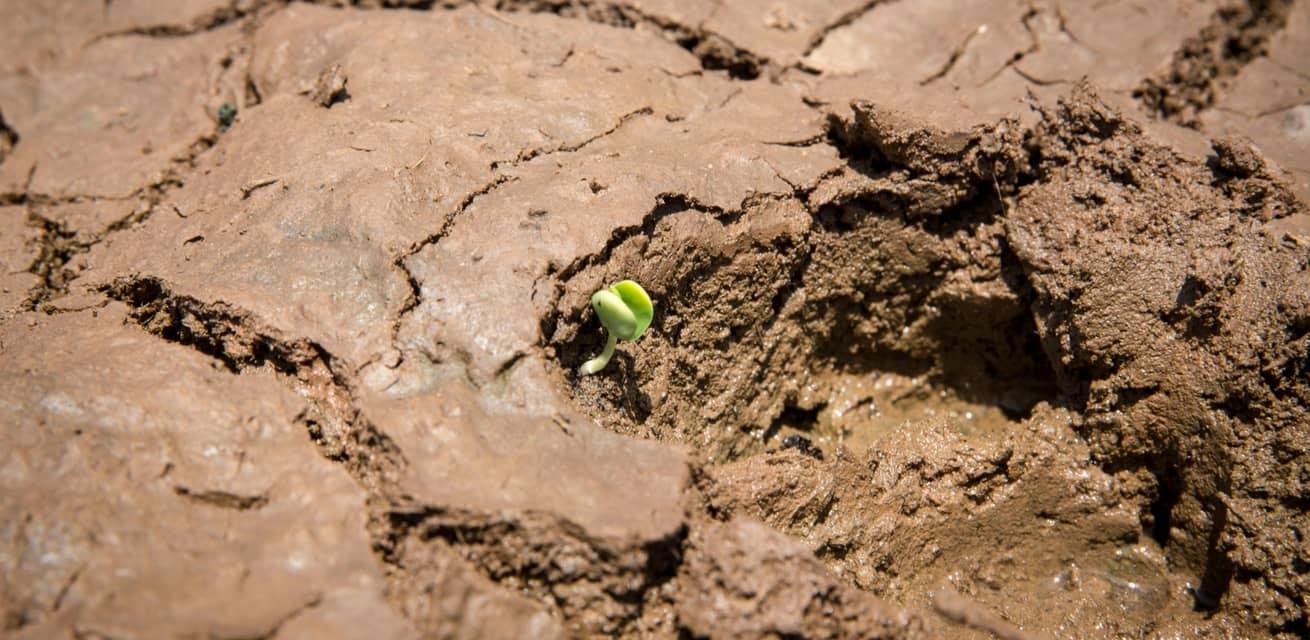 hongersnood afrika nodhulp oplossing planten